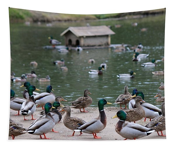 Tapestry featuring the photograph Rainy Day Duck Party - 2  by Christy Pooschke