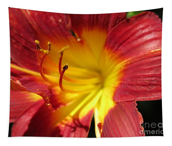 Red And Yellow Day Lily Tapestry