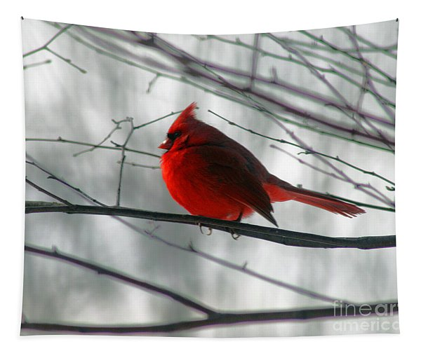 Red Cardinal On Winter Branch  Tapestry