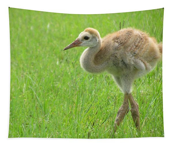 Sandhill Crane Chick Following Parents Tapestry