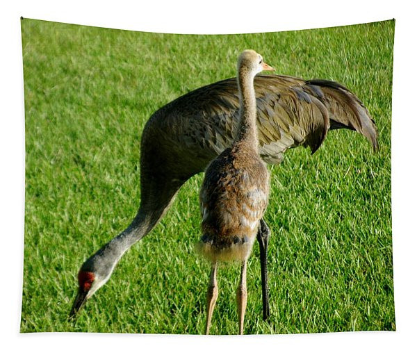 Sandhill Crane With Chick II Tapestry