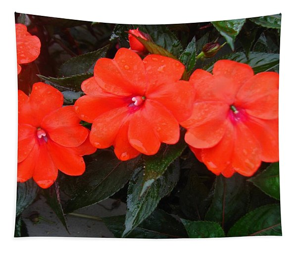 The Dew On The Sunpatiens Tapestry