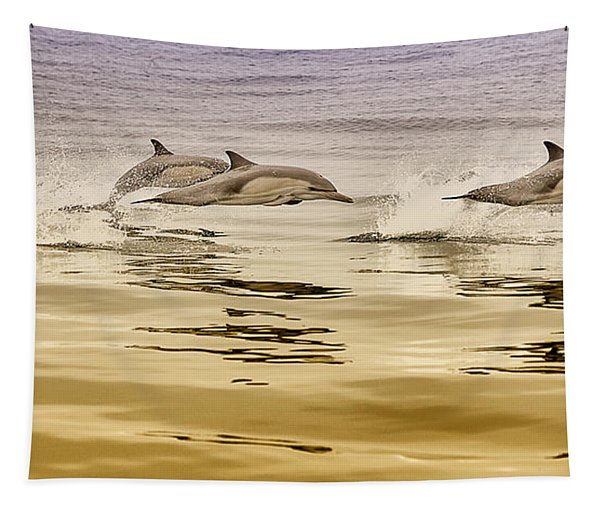 Dolphin Canvas Print, Photographic Print, Art Print, Framed Print, Greeting Card, Iphone Case, Tapestry
