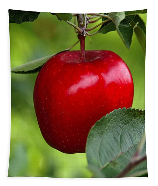 The Red Apple Tapestry