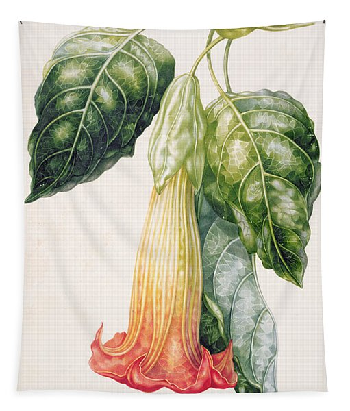 Thorn Apple Flower From Ecuador Datura Rosei Tapestry