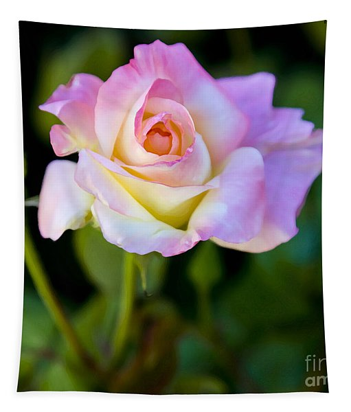 Rose-touch Me Softly Tapestry
