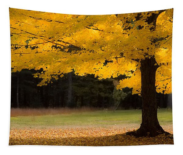 Tree Canopy Glowing In The Morning Sun Tapestry