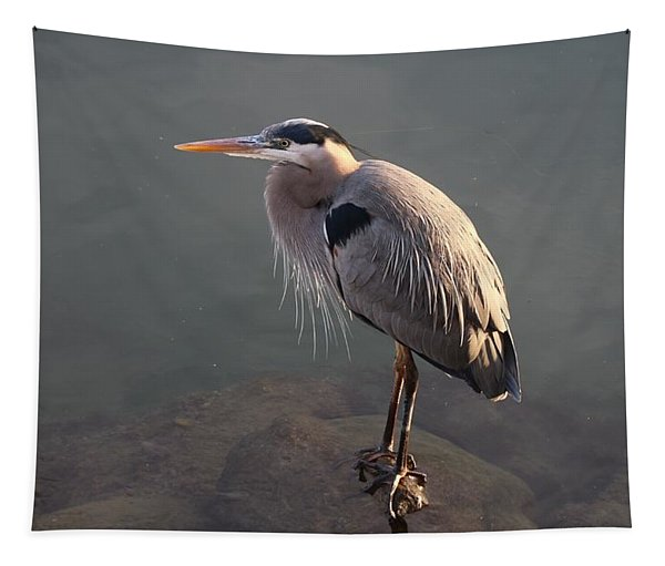 Tapestry featuring the photograph Waiting Heron by Christy Pooschke
