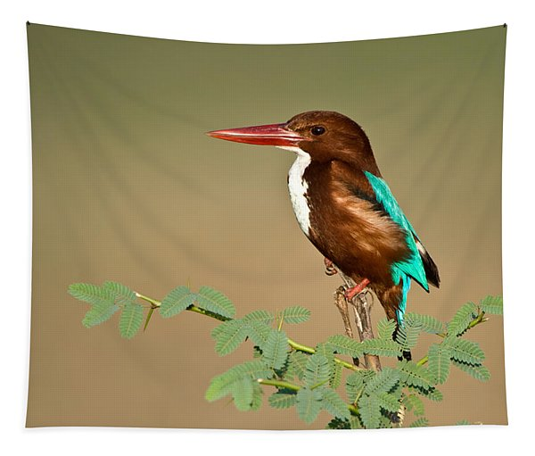 White-throated Kingfisher Halcyon Tapestry