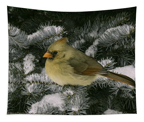 Winter Female Cardinal In Snow Covered Pine Tapestry