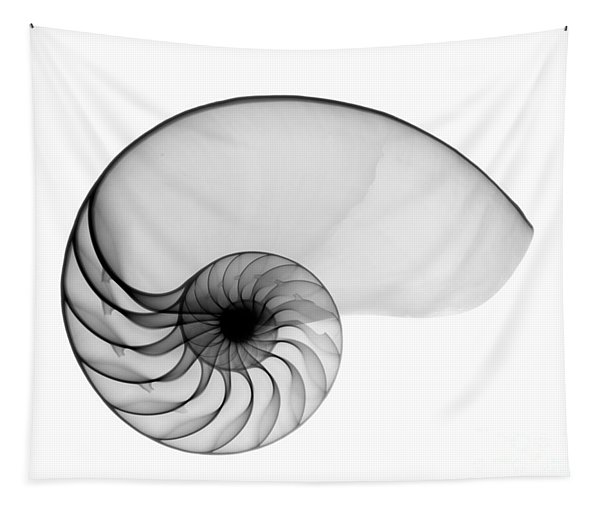 X-ray Of Nautilus Tapestry