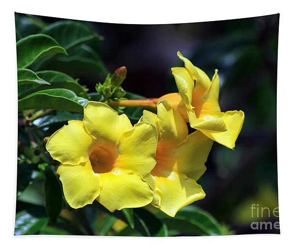 Yellow Allamanda Tapestry