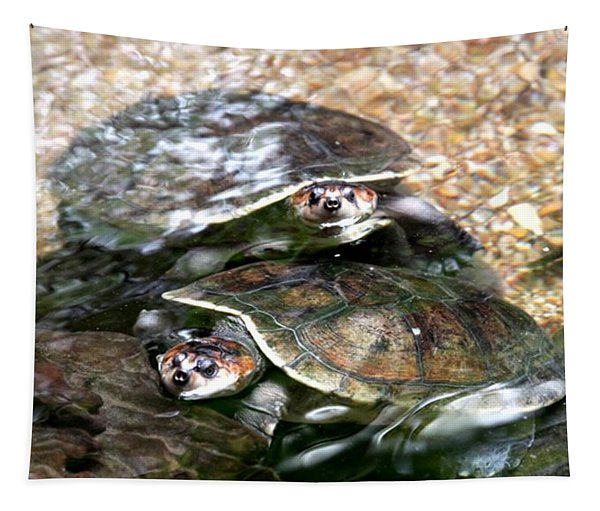 Turtle Two Turtle Love Tapestry