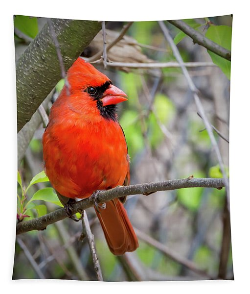 Cardinal Perched Tapestry