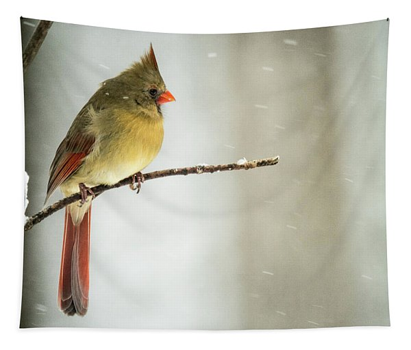 Female Cardinal In Snowstorm Tapestry