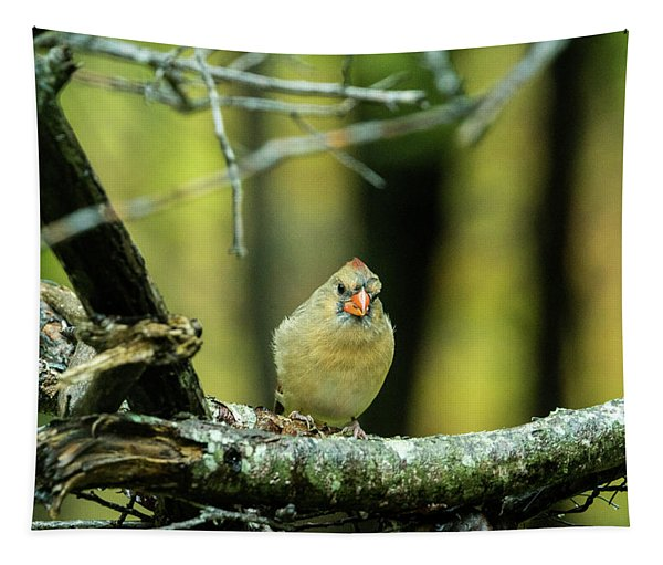 Intent Cardinal Tapestry