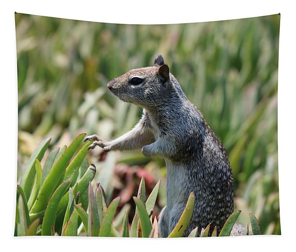 Tapestry featuring the photograph Rock Squirrel  by Christy Pooschke