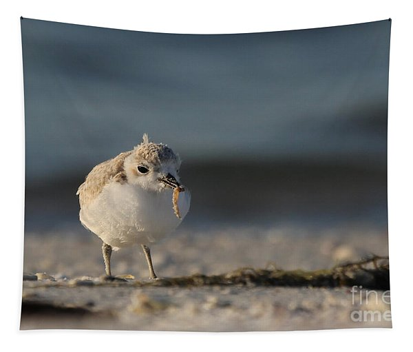 Snowy Plover Tapestry