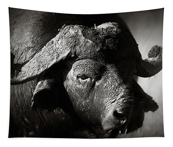 African Buffalo Bull Close-up Tapestry