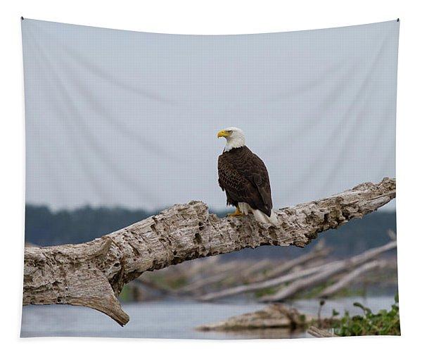 Bald Eagle #1 Tapestry