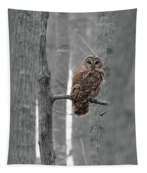 Barred Owl In Winter Woods #1 Tapestry