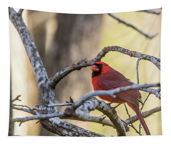 Cardinal Among The Branches Tapestry