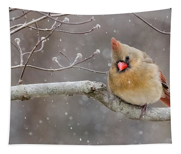 Cardinal And Falling Snow Tapestry
