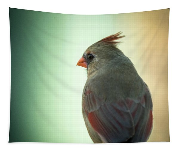 Cardinal Female In Early Dawn Tapestry