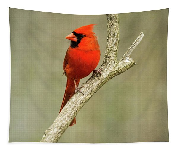 Cardinal Lookd For Mate Tapestry
