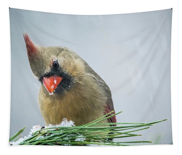 Cardinal - Whats Down There Tapestry