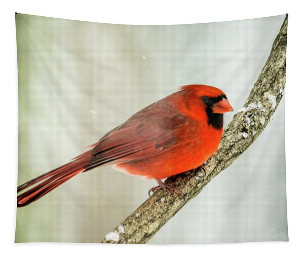 Cardinal With A Flattop Tapestry