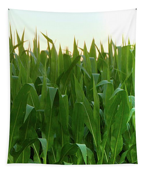Corn Of July Tapestry
