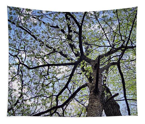 Dogwood Canopy Tapestry