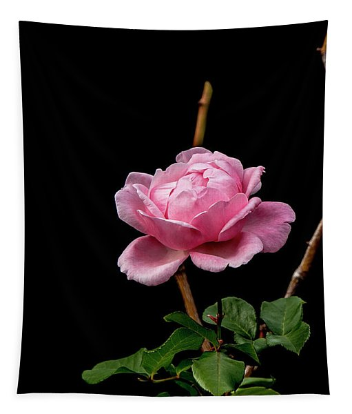 Elizabeth Tapestry