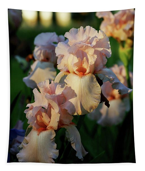 End Of Day Pink Irises 6702 H_2 Tapestry