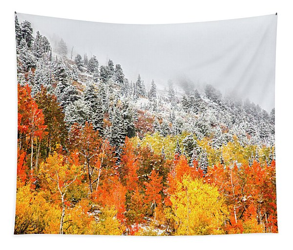 Fall To Winter Canvas Print, Photographic Print, Art Print, Framed Print, Greeting Card, Iphone Case Tapestry