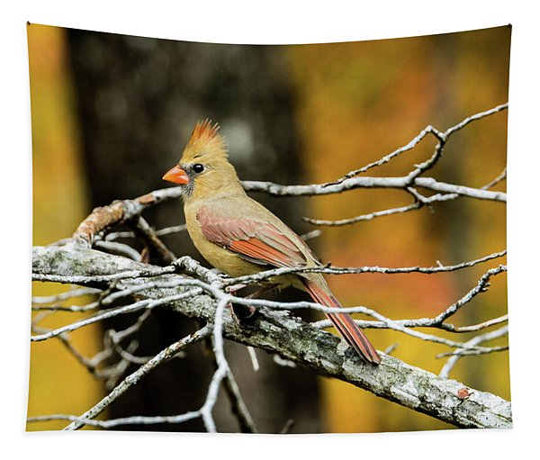Female Cardinal Eying A Bit Of Food Tapestry