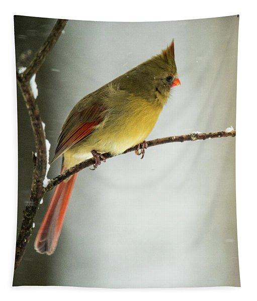 Female Cardinal Looking For Food Tapestry