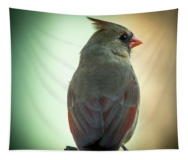 Female Cardinal Looking Over Shoulder At Dawn Tapestry