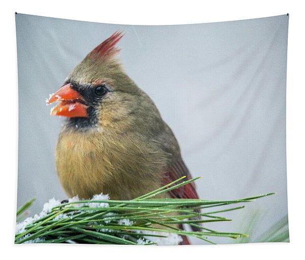 Female Cardinal On Snowy Pine Branch Tapestry