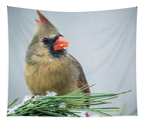 Female Cardinal Picking At Snow Tapestry