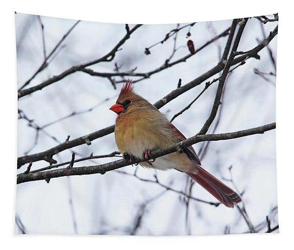 Female Northern Cardinal In Winter Tapestry