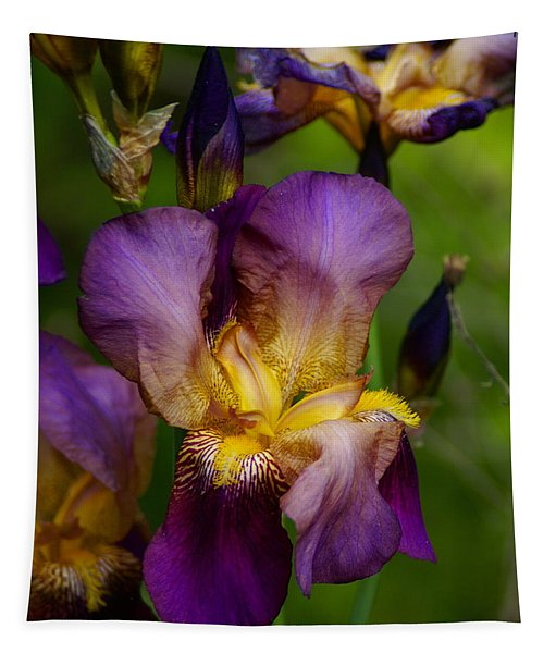 For The Love Of Iris Tapestry