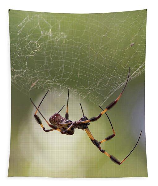 Golden-silk Spider Tapestry