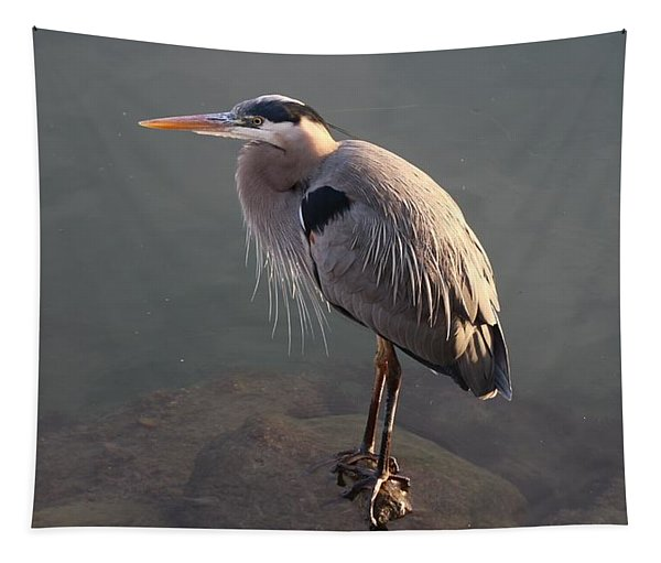 Tapestry featuring the photograph Great Blue Heron - 5 by Christy Pooschke
