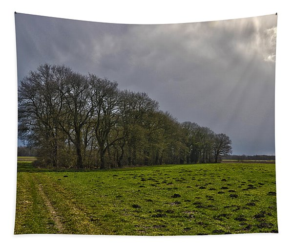 Group Of Trees Against A Dark Sky Tapestry