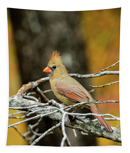 Intent Cardinal With An Attitude Tapestry