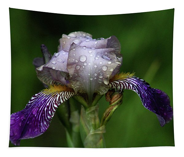 Iris After The Rain 1409 H_2 Tapestry