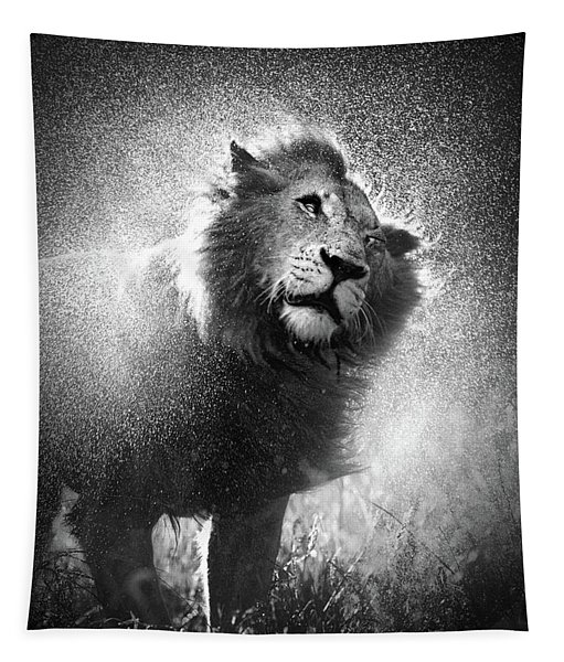 Lion Shaking Off Water Tapestry