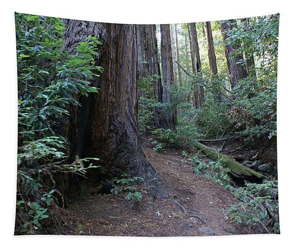 Magical Path Through The Redwoods On Mount Tamalpais Tapestry
